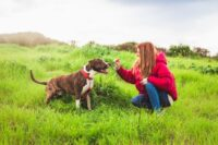 Steeds meer vraag naar opvang huisdieren