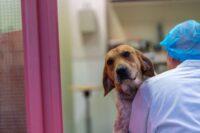 Actie tegen proeven met dieren