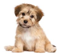 Een puppy gekocht, wat nu?