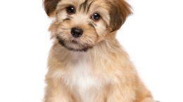 Een puppy gekocht